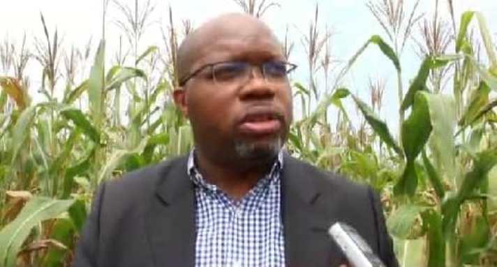 Kasaï oriental : La récolte des maïs du programme volontariste Agricole annoncée pour Février